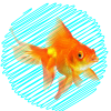 Товары для рыб