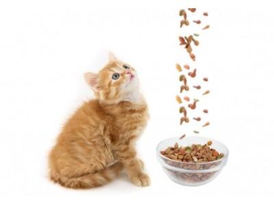 Как бы ветеринар выбирал корм для своей кошки?