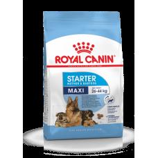 Royal Canin Maxi Starter M&B,начальный корм для щенков крупных пород,уп.15 кг